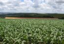 Safra de verão no Paraná deve chegar a 24,2 milhões de toneladas